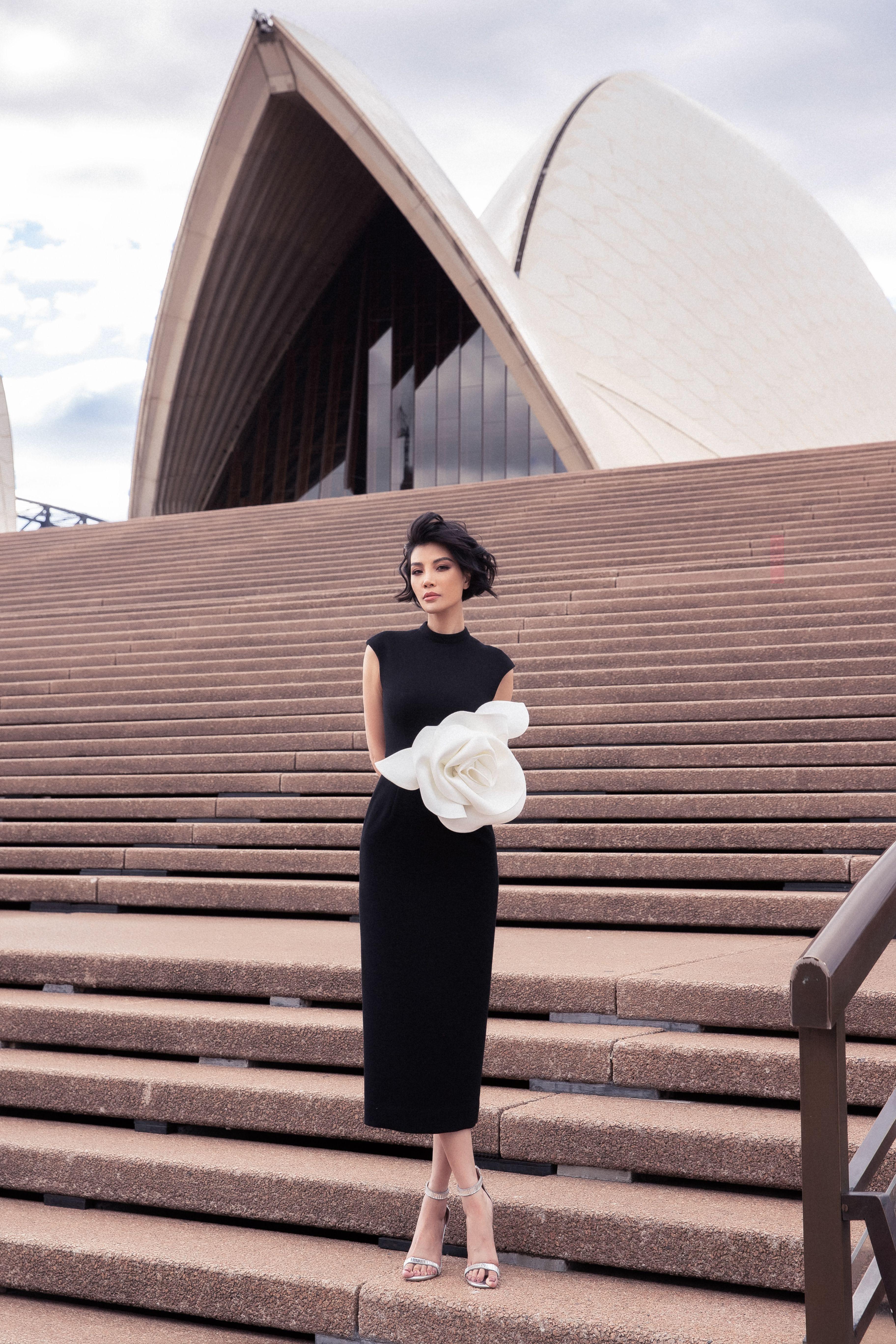 Bông hồng Sydney